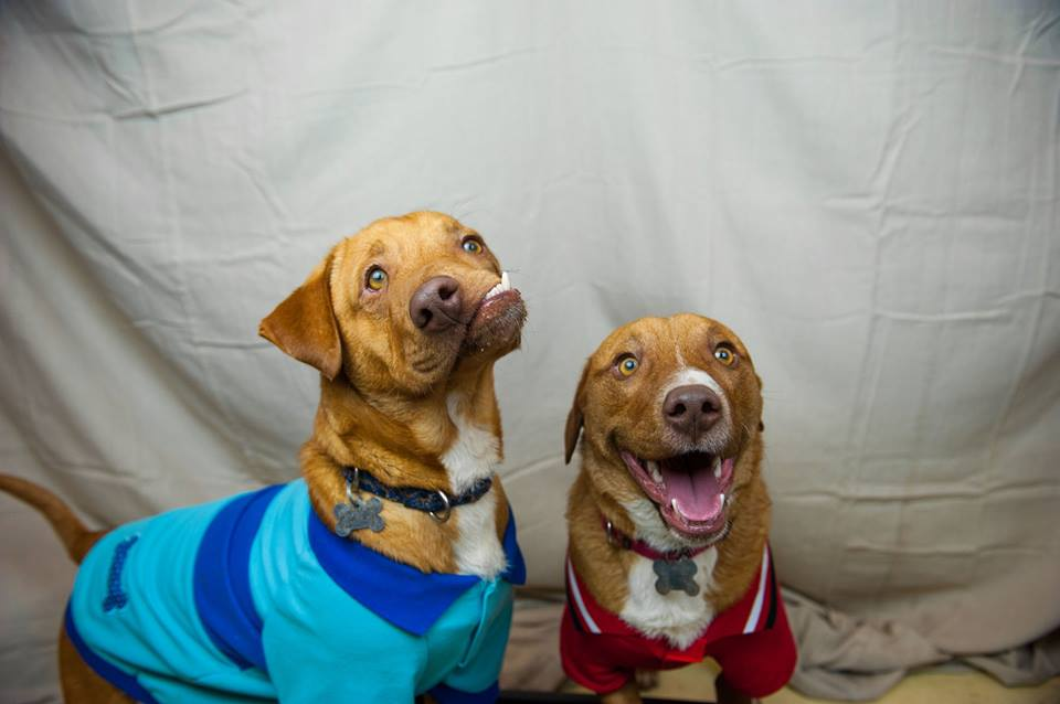 Dog Picasso and Pablo - Luvable Dog Rescue