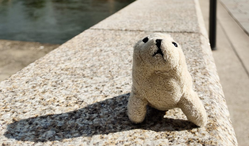 Robbie the Seal