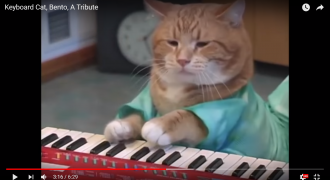 bento keyboard cat