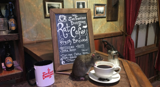 San Francisco Dungeon Rat Cafe