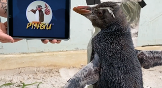 Videostill: Perth Zoo