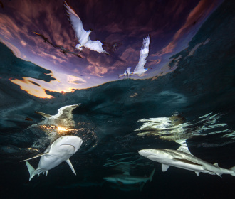 Shark's Skylight door Renee Capozzola