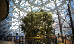Amazon The Spheres in Seattle